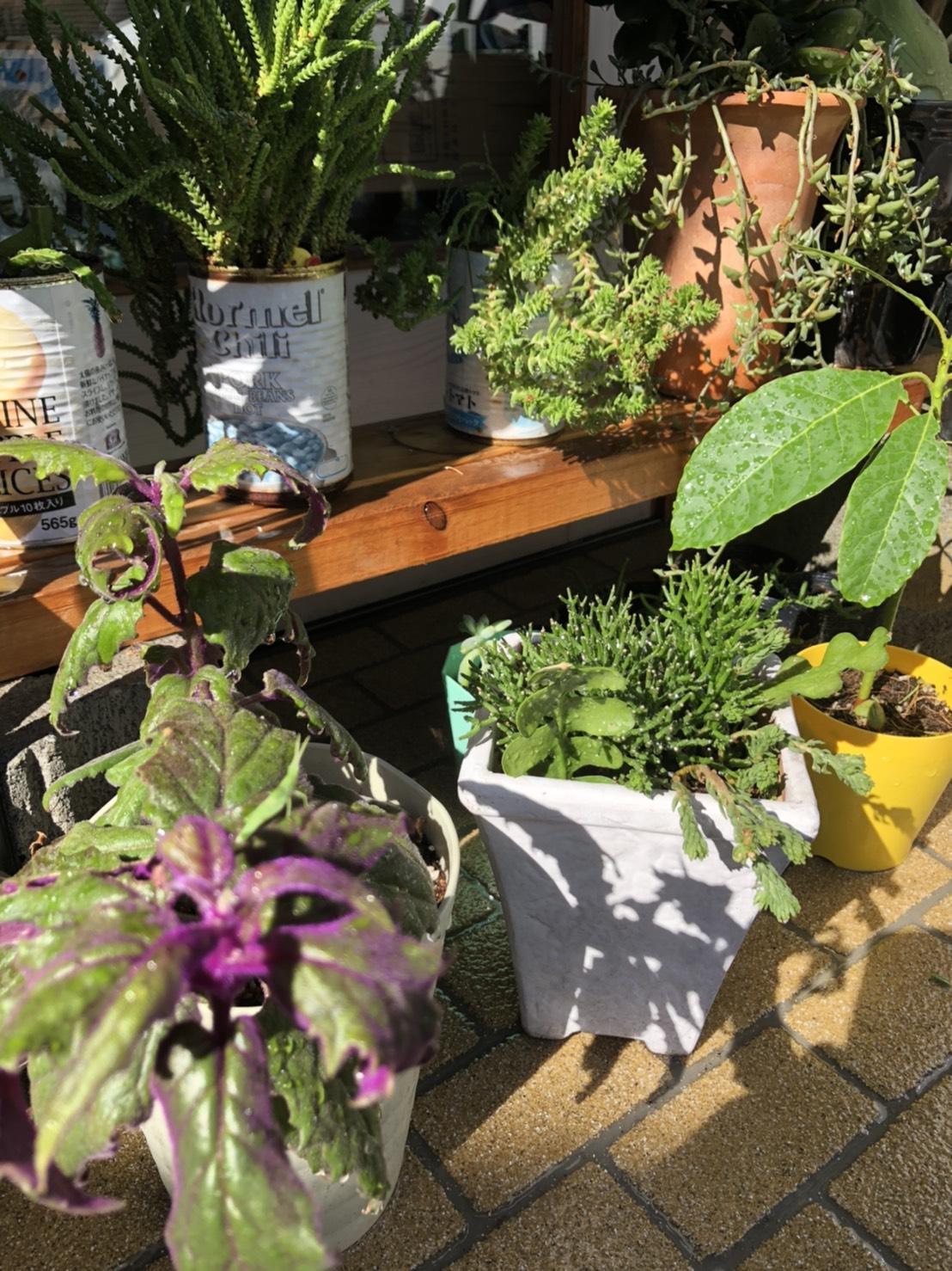 竜門整骨院の植物たち