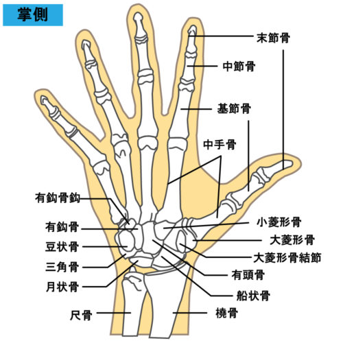 指の捻挫 構造
