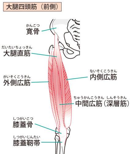竜門整骨院 成長期 膝